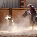 Working Cow Horse | fotografie